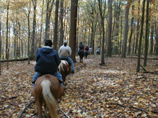 Patapsco Horse-back Riding